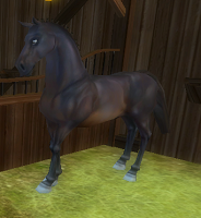 New Horse Guide (2/6)