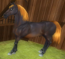 New Horse Guide (5/6)
