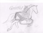 Gaited Horse